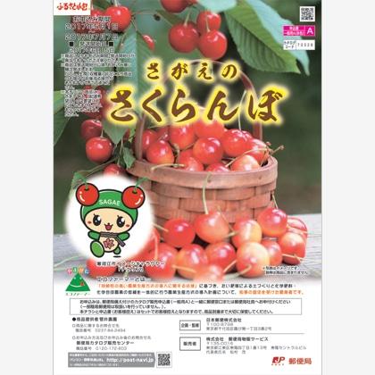 さくらんぼ紅秀峰 1kg(500g×2)バラ詰