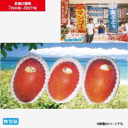 沖縄県産マンゴー 1Kg
