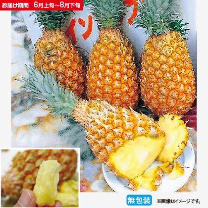沖縄県産ボゴールパイン2.5Kg