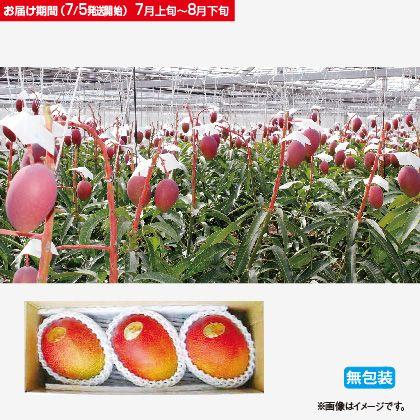 沖縄産完熟アップルマンゴー1Kg