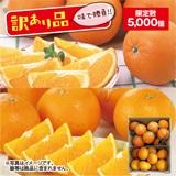 訳あり木熟清見オレンジ・木熟ネーブルオレンジ
