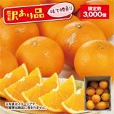訳あり木熟清見オレンジ